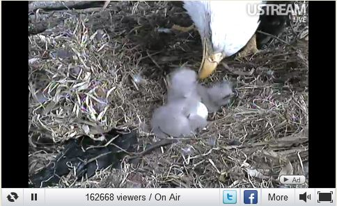 Eagle Web Cam